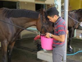騎乗後に水を飲ませています