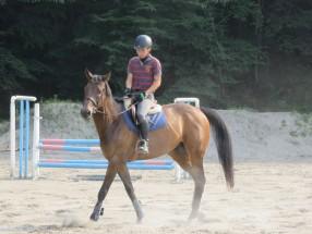 ◎馬場馬術では、馬の歩みや姿勢が重要。これはなみあし。