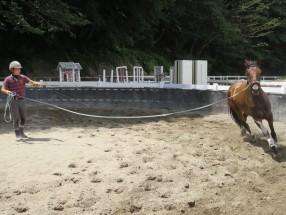 ◎馬の練習と運動風景